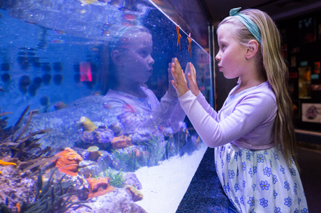 Girl looking in at fish in a tank at an aquarium